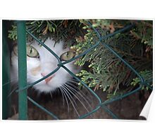 Peeking Through The Fence Poster
