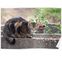 Neighbour's Cat  Poster