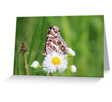 butterfly on small flower in field Greeting Card