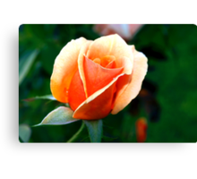 Peach rosebud Canvas Print