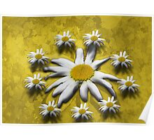 Flowers around Poster