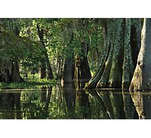 Louisiana Bayou Photographic Print