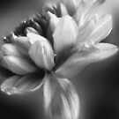 Colourless by Ann Persse