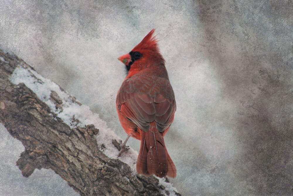 Cardinal in Snowstorm by Linda Trine