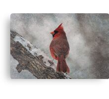 Cardinal in Snowstorm Canvas Print