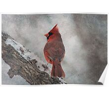 Cardinal in Snowstorm Poster