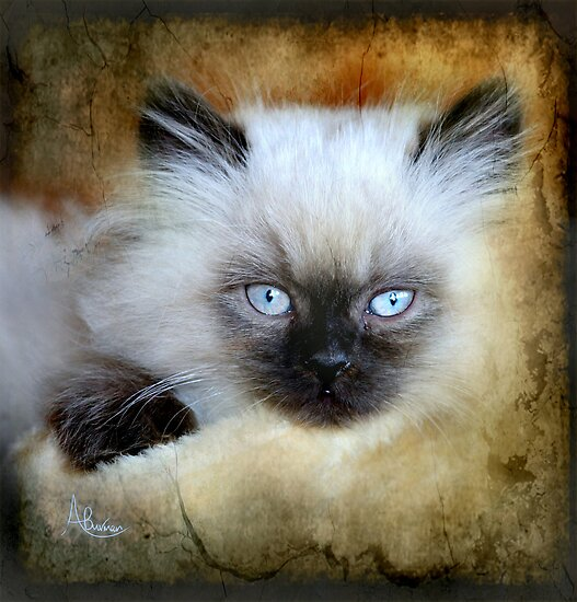 Little Blue Eyes by Angela  Burman