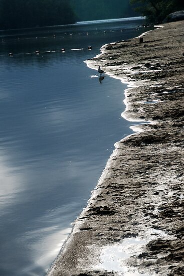 Shore's Edge by Barry Doherty