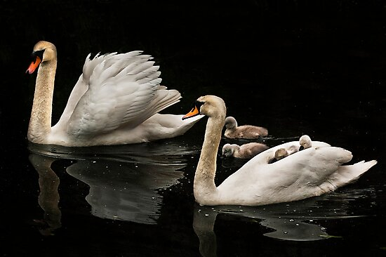 Family Life by Don Alexander Lumsden (Echo7)