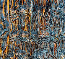 Aged Wood by Earl Horca