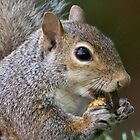 An Appealing Nut by Lee Hiller