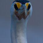 No I'm not am Emu! by Steve Bass