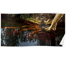 Tree Roots - Cooloola N.P. Poster