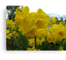 Vacationing on a daffodil Canvas Print