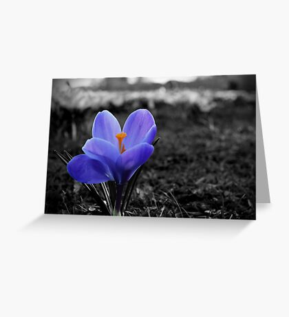 Selective Colour Flower Greeting Card