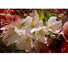 Spring's Beauty Photographic Print