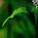 Leaf by Mary Ann Reilly