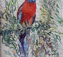 Red Parrot - Grampians National Park by Kay Cunningham