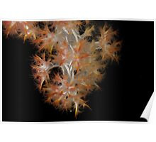 Nephtheid Soft Coral Poster