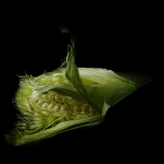 Corn by Barbara Morrison