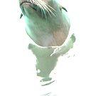 Seal Model by shandab3ar