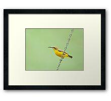 Bird on a wire - sunbird  Framed Print