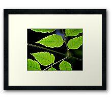 Nature's geometry Framed Print