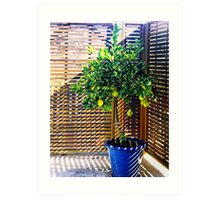 lemon tree - 1st Toyo-G attempt Art Print