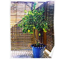 lemon tree - 1st Toyo-G attempt Poster