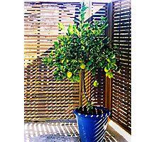 lemon tree - 1st Toyo-G attempt Photographic Print