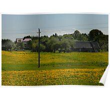 Spring in old farmstead (dandelion bloom) Poster
