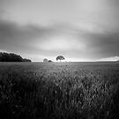 Lone Tree at Deffer by Rory Garforth