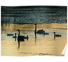 Black Swan Silhouette  Poster