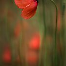 Poppy party by Mandy Disher