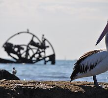 Pelican by AngGrieve
