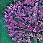 Textured Allium by Astrid Ewing Photography