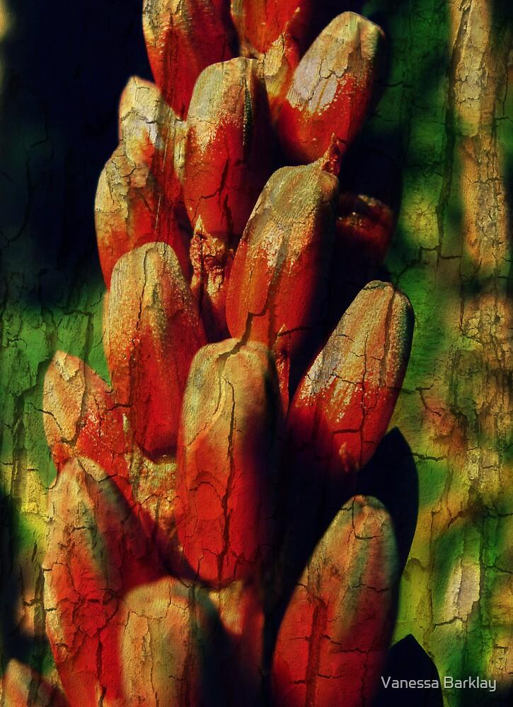 Cracked Aloe by Vanessa Barklay
