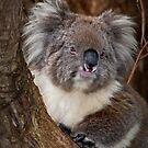 Kylie Koala, Aussie Icon by Barb Leopold