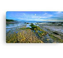 Green Old Longie Canvas Print