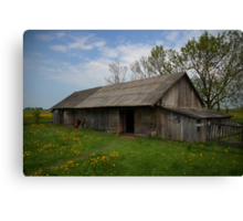 Spring in old farmstead (Barn: chickens, pigs, sheeps, cows) Canvas Print