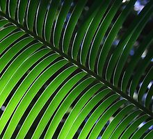 Green Nature - A single fern frond.  by Jennifer Gillham