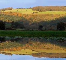 Reflections by Linda Wright