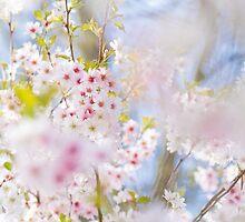 Glory of Spring by Sarah-fiona Helme