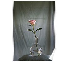 Offer...... a rose Poster