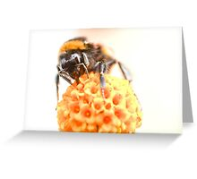 Pop Pom Queen Greeting Card