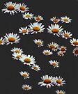 Falling Daisies by Darren Burroughs