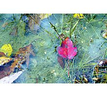 Red Pond Leaf Photographic Print