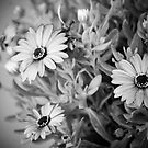 Black & White Beauty by Pat Moore