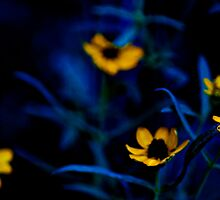 Deep down to my lawn...: On Featured work: Extra-ordinary-photography Group by Kornrawiee