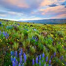 High Desert Spring by DawsonImages